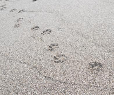 digital footprint_SEO_analytics that profit